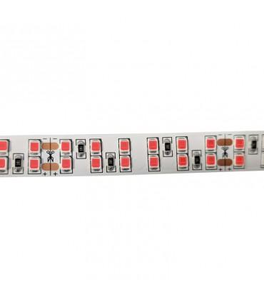TIRA LED 24V 2835 IP20 240CH 20W/M ROJO